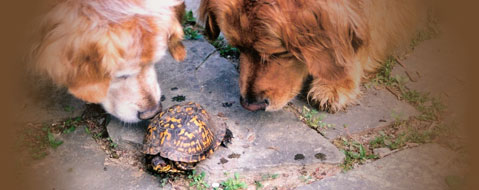 Two Dogs with Turtle