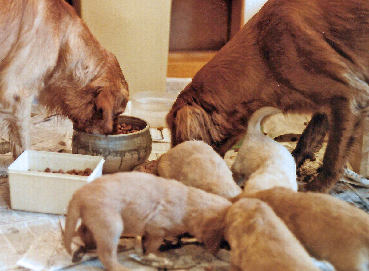 Animal Clinic At Thorndale Pcraising Puppies Newborn To New Home