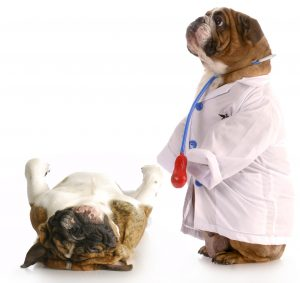 """Are yearly check-ups worth the money? I think """"yes""""! Preventative pet care can diagnose problems before they spiral out of control."""