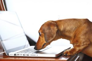 Finding a safe and reputable online pharmacy with the best deals in pet care can be a daunting task.