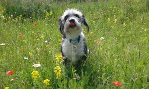 A dog in a field representing the importance of tick prevention