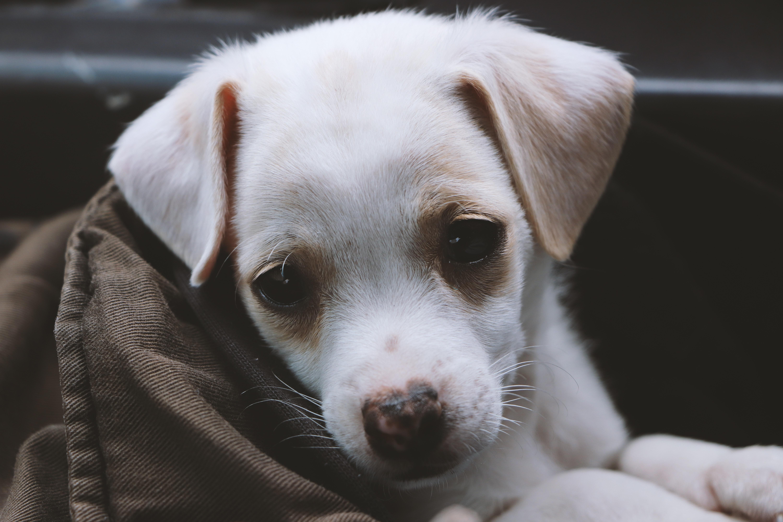 subcutaneous fluid dog